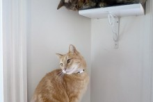 DIY-Cat-Wall-Perch1