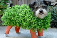 DIY-Chia-Pet-Dog-Costume