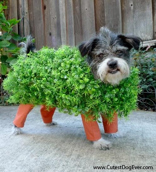 DIY Chia Pet Dog Costume ... & DIY Dog Pirate Costume - petdiys.com