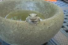 DIY-Concrete-Garden-Water-Bowl