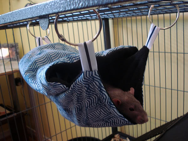diy covered rodent hammock   petdiys    rh   petdiys