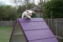 DIY-Dog-Agility-A-Frame