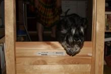 DIY-Dog-Agility-Hurdle