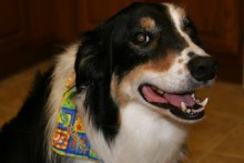 DIY-Dog-Collar-Bandana