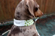 DIY-Dog-Collar-Cover