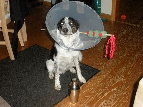 17 Amazing DIY Halloween Costumes For Dogs | Life Cheating