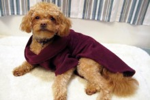 DIY-Dog-Snuggie