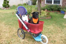 DIY-Dog-Stroller