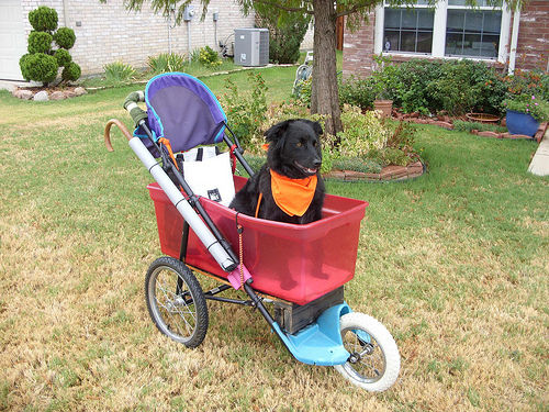 Can You Make Home Made Dog Car Seat