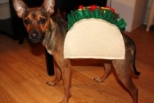 DIY-Dog-Taco-Costume