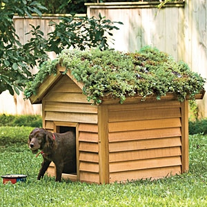 DIY Doghouse Green Roof