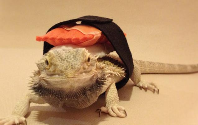 Lizard Costume Diy Diy Dragon Sushi Roll Costume