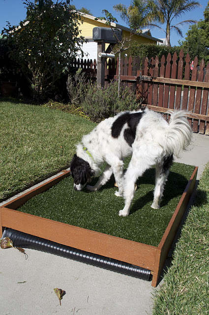 Diy Draining Patio Dog Potty Petdiys Com