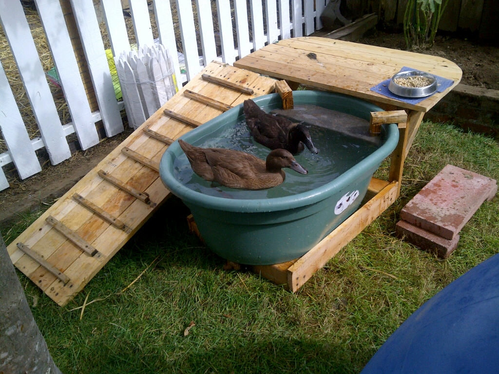 Diy duck pool deck for Diy small pool