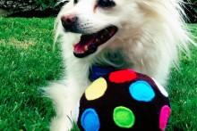 DIY-Fabric-Dog-Ball1