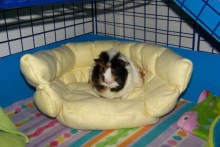 DIY-Fabric-Rodent-Couch