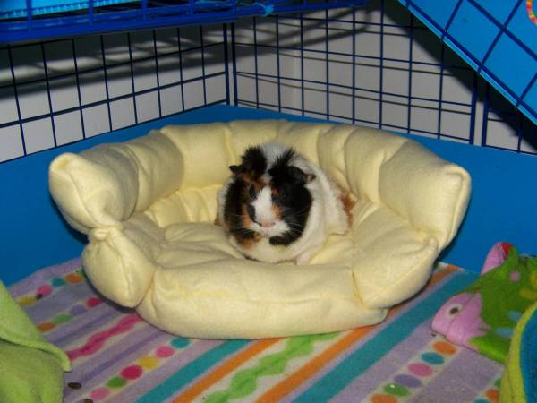Diy guinea pig couch for How to make a guinea pig bed