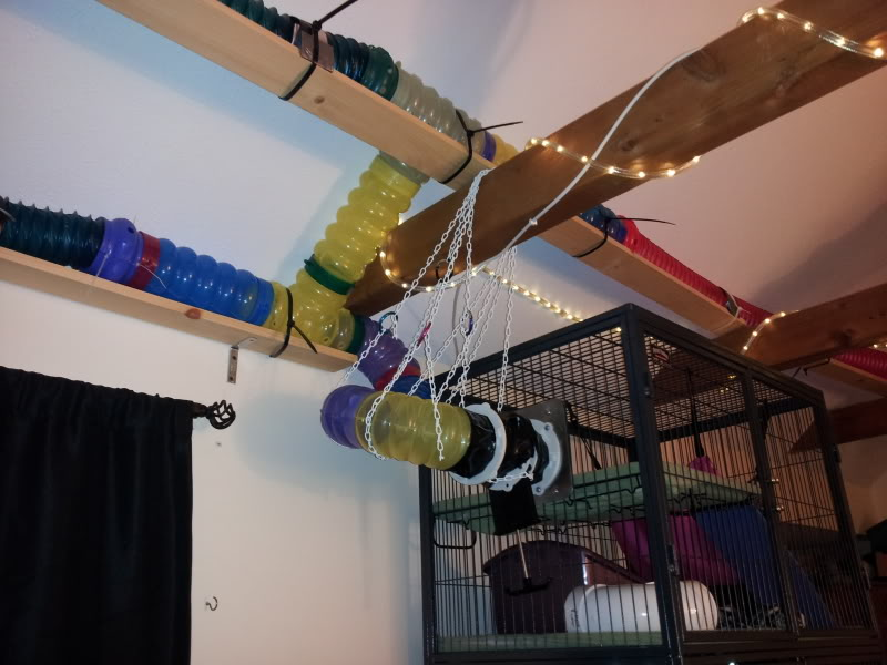 Diy Ferret Catwalk Petdiys Com