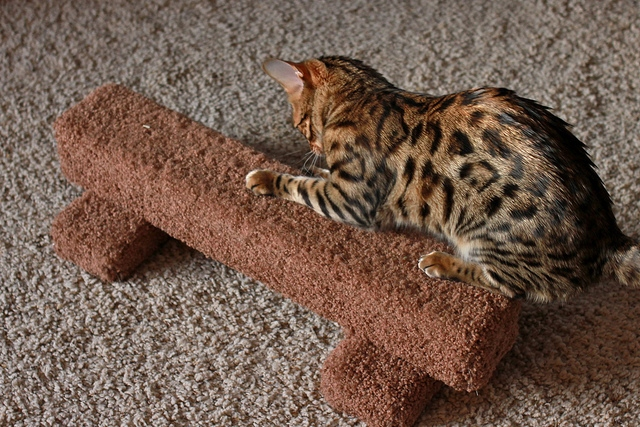 How to stop cats scratching carpets and walls