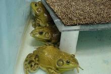 DIY-Frog-Perch