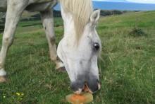 DIY-Frozen-Horse-Lick