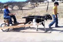 DIY-Goat-Cart