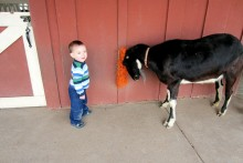 DIY-Goat-Grooming-Station