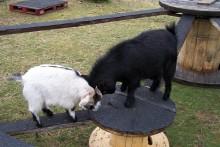 DIY-Goat-Kid-Playground
