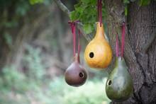 DIY-Gourd-Birdhouse