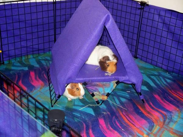 Diy Guinea Pig Loft Tent Petdiys Com