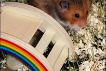 DIY-Hamster-Garden