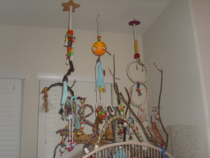 Diy Hanging Bird Playground Petdiys Com