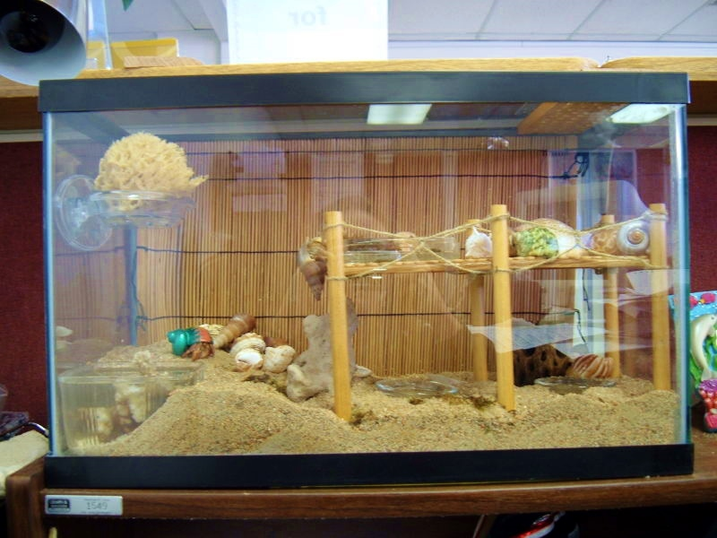 DIY Hermit Crab Boardwalk