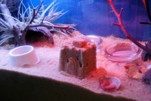 DIY-Hermit-Crab-Digging-Castle1