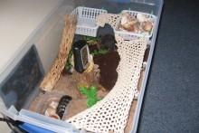 DIY-Hermit-Crab-Habitat