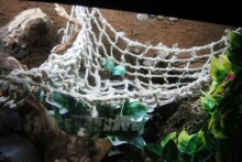 DIY-Hermit-Crab-Net