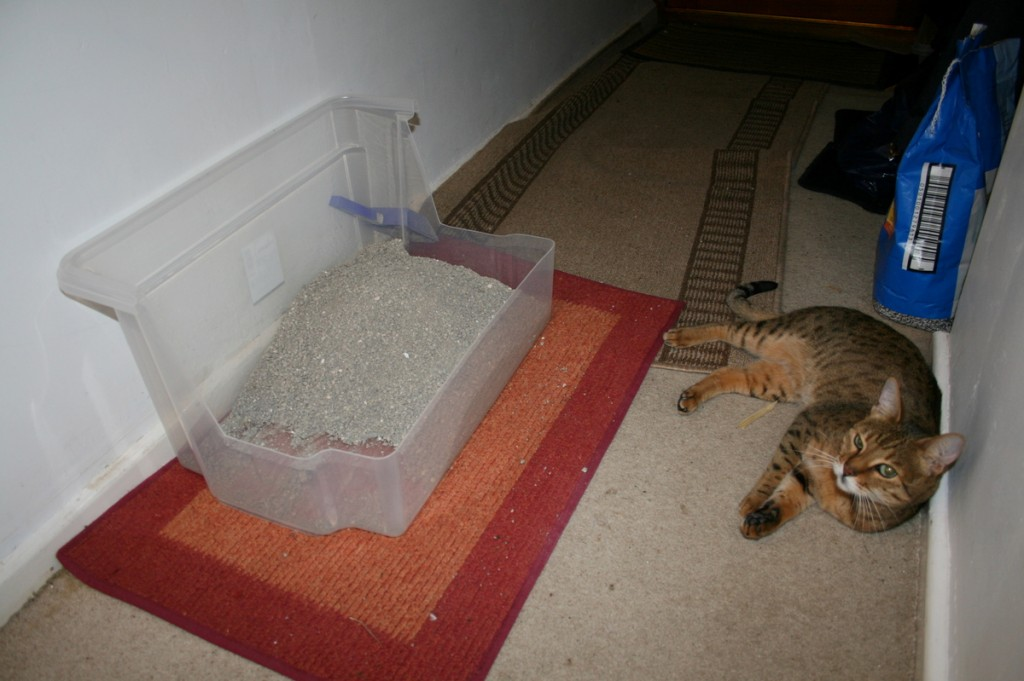 Cat in litter box long time
