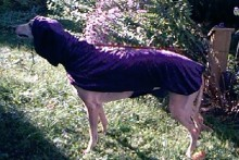 DIY-Hooded-Dog-Coat