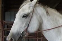DIY-Horse-Bridle