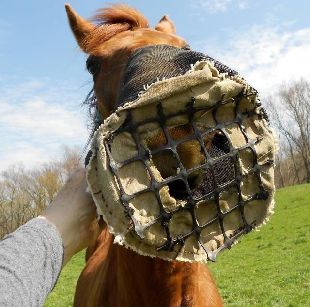 Diy Horse Muzzle Petdiys Com