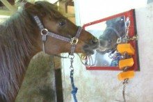 DIY-Horse-Stall-Entertainment1