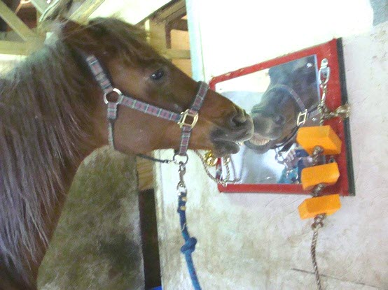 Diy Barn Stall Entertainment Petdiys Com