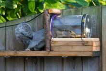 DIY-Jar-Squirrel-Feeder
