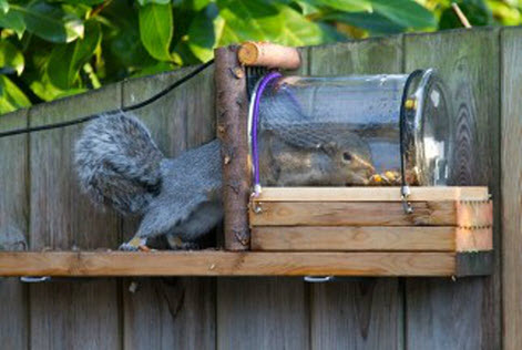 Homemade Squirrel Feeder Pictures