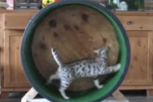 DIY-Lazy-Susan-Cat-Treadmill