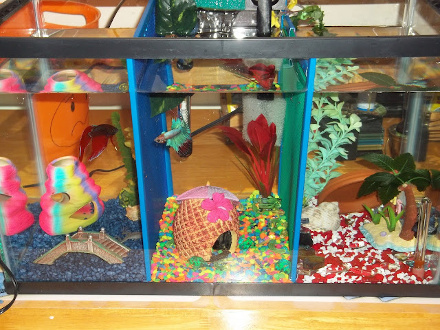 Diy Betta Fish Tanks Betta Fish Tank Divider