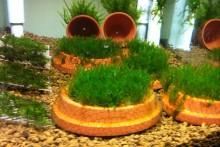 DIY-Mesh-Aquarium-Planters