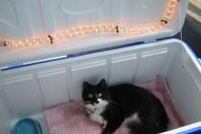 DIY-Outdoor-Cat-House