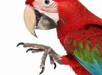 DIY-Parrot-Foot-Wave-Trick
