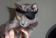DIY-Pet-Pirate-Eye-Patch